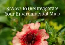 3-Ways-to-ReInvigorate-Your-Environmental-Mojo