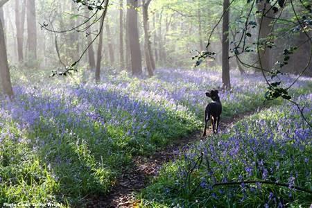 """Dawn in Laughton Woods""."