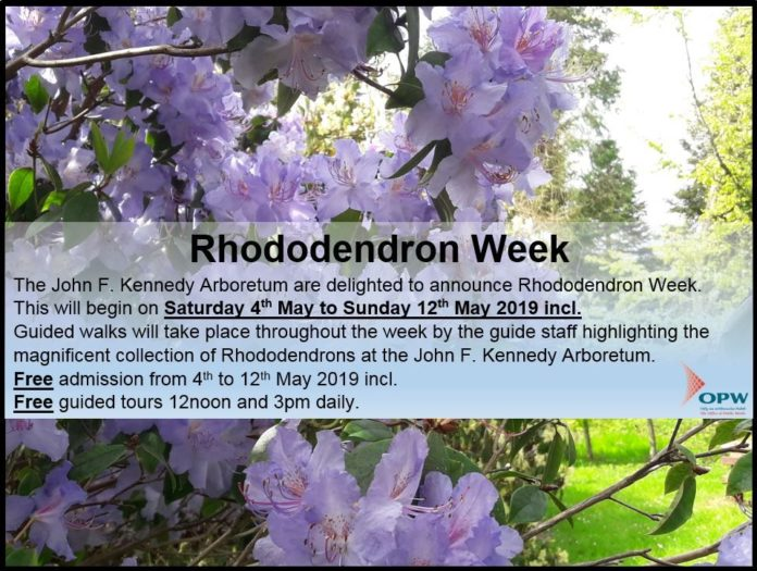 Rhododendron Week Photo