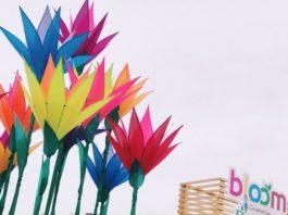 Bloom-2019