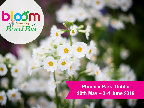 Bloom 2019 open day