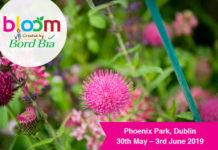 bloom flower image