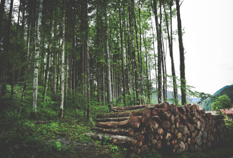 Doyle launches 'Forest Connections' project in Kerry
