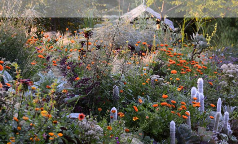 Hunting Brook Gardens Update