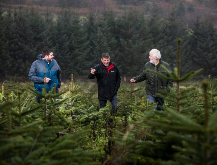 Minister of State at the Department of Agriculture, Food and Marine, Andrew Doyle T.D. urged people to buy a real Irish Christmas tree this year as he visited Wicklow Way Christmas Tree Farm run by the Kinlan family.
