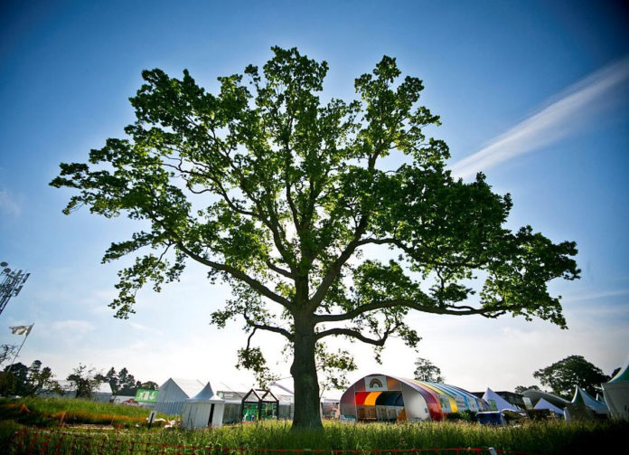 An image of a tree in Bloom festival.
