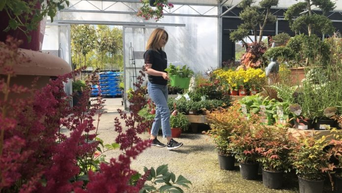 Doyles Nursery & Garden Centre in Cabinteely, Dublin is preparing to reopen later this month