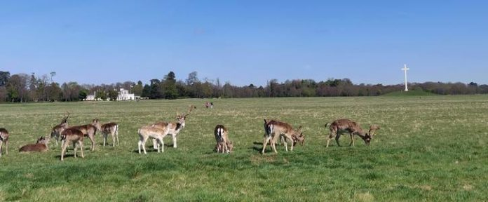 An image of animals in a Phoenix park